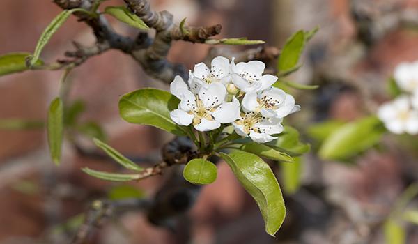 Seasonal Update – May
